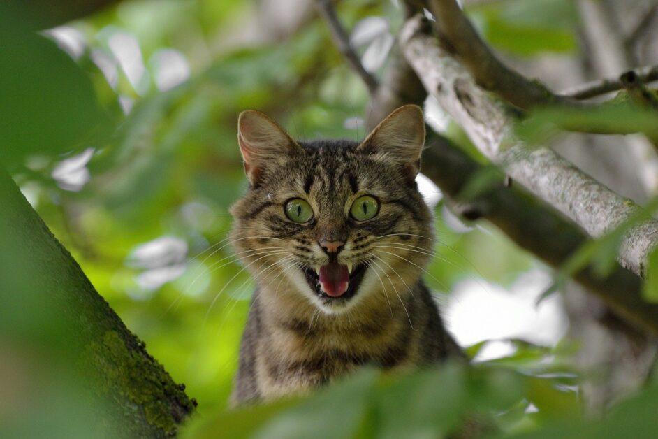 cat, aggression, emotions